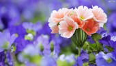 beautiful-flower-wallpaper-01